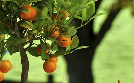 Klettergerüst Baum : Schulhof erhält neues klettergerüst mannheimer morgen